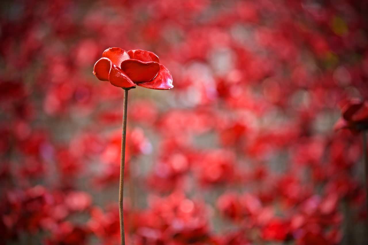 Gary Baker - single poppy